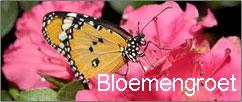 Bloemen groet